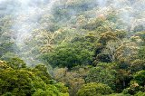Green India Mission: Let a million acres of forest bloom