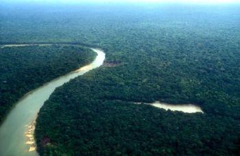 The Amazon is fast shrinking