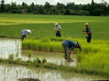Thailand is the world's biggest exporter of rice