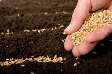 Argentina hopes for a better harvest soon