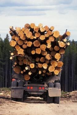 Canada Lumber Trade