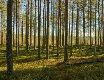 Finland Forests