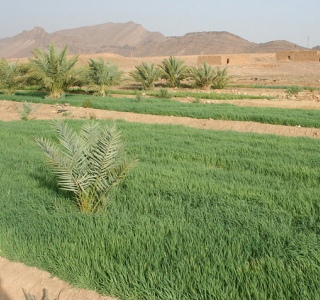 Agriculture is an important aspect of the Moroccan economy