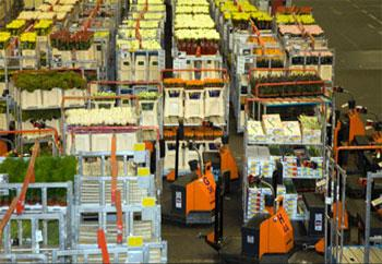 Alsmeer holds the world's largest flower auction