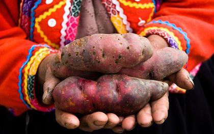 Potato Peru